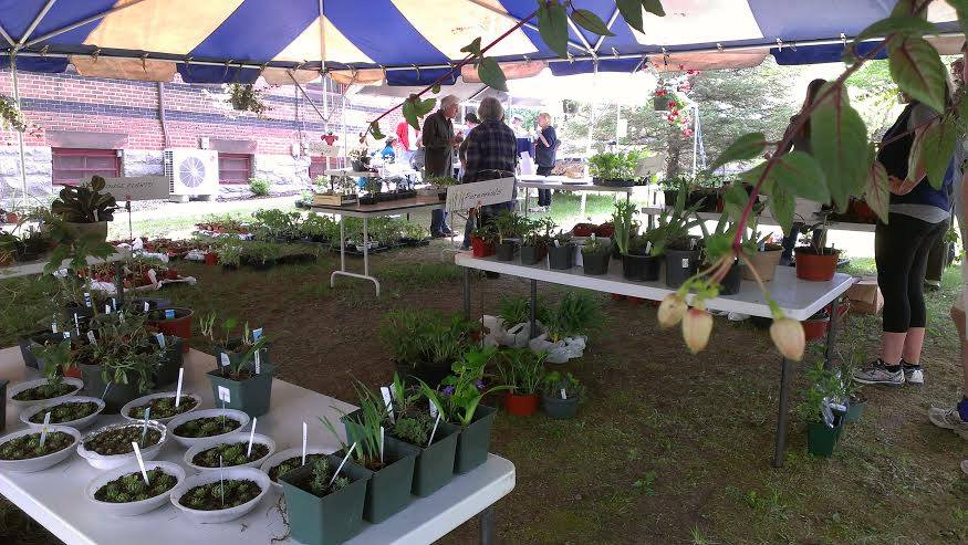 Friends of the Library plant sale